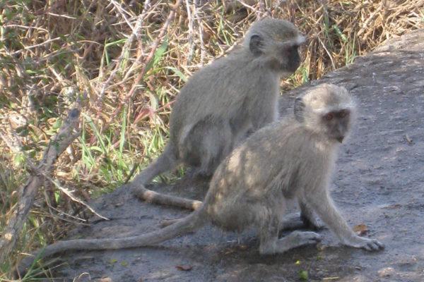 Zimbabwe Scenery (13)
