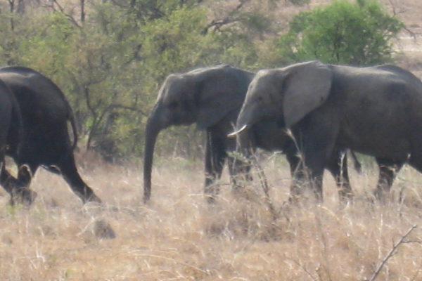 Zimbabwe Scenery (21)