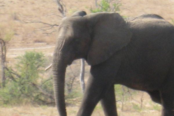 Zimbabwe Scenery (22)