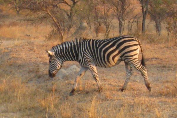 Zimbabwe Scenery (25)