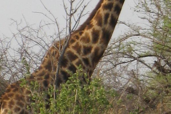 Zimbabwe Scenery (4)