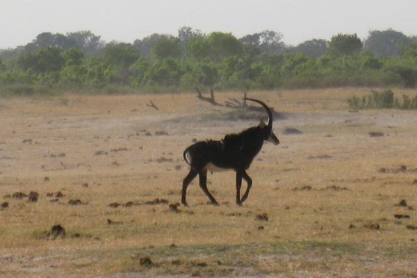Zimbabwe Scenery (6)
